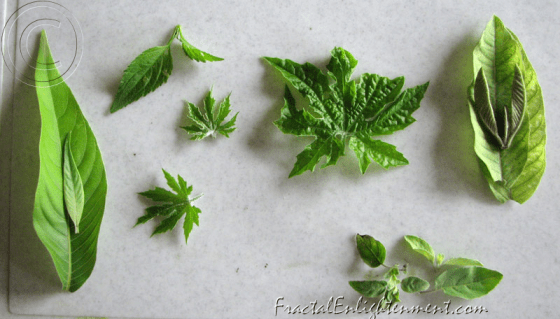 potion made from leaves of Adulsa, Phangli, bitter gourd, guava and tulsi