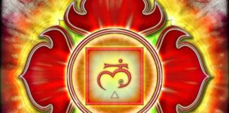 Muladhara chakra is the seat of Kundalini energy