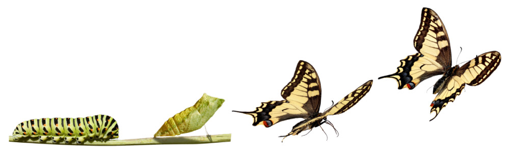 Transformation-Butterfly