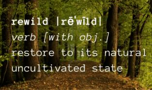 The Great Rewilding: Three Ways to Rewild Humanity